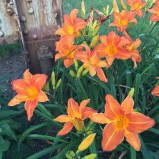 green_flowers_brownline